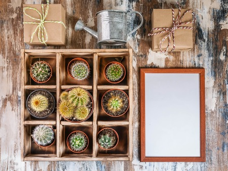 Mock Up Collection of cacti in wooden box. Photo of various types of cacti. Image toning. Top view