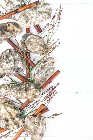 Vertical spa banner. Oyster shells, sea pebbles, dry bamboo, young sprouts on a wooden white background. 免版税图像