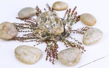 SPA oriental composition. Oyster shells, sea pebbles, young sprouts on a wooden white background.