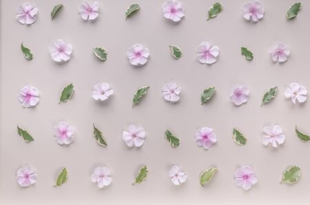 Floral pattern on a beige background. Phlox flowers and green leaves. Top view. Flat lay Stock Photo