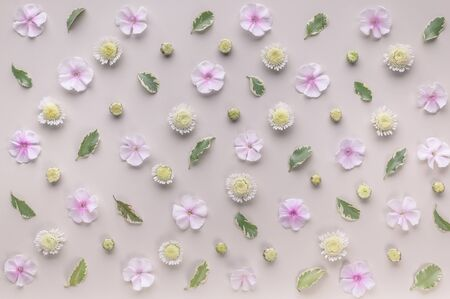 Floral pattern on a beige background. Phlox flowers, chrysanthemums and green leaves. Top view. Flat lay