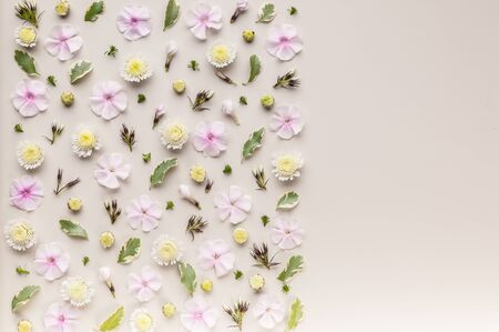 Flower pattern on a beige background. Phlox flowers, chrysanthemums and green leaves. Top view. Copy space. Flat lay Stock Photo