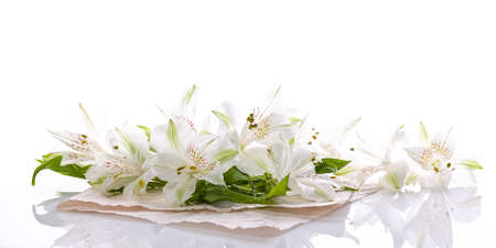 Banner format. Graceful white flowers on a glossy background. Alstrameria. Blank for a greeting card Reklamní fotografie