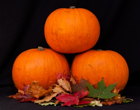 A t of pumpkins against a black background. Stock Photo - 23812658