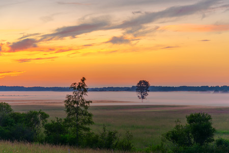 tree in a field with fog or mist at sunset time photo