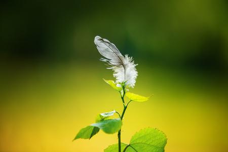 Lost white bird feather in the garden on small tree 版權商用圖片