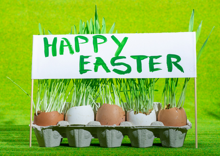 easter eggs and green grass and poster