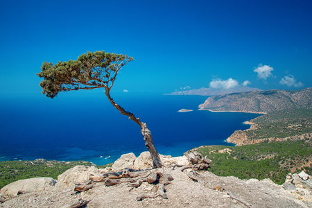 Alone tree on a Monolithos Castle cliff Stok Fotoğraf - 123733010