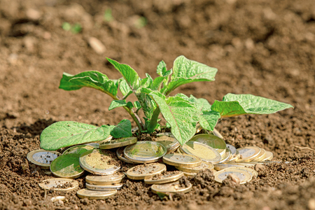 Coins in soil with young plant. Money growth concept. 版權商用圖片 - 123733032