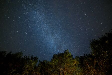 Milk Way night sky over pine trees at Soodla, Estonia 版權商用圖片