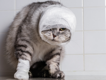 How to bandage a cat wound