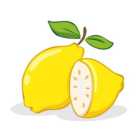 Vector illustration of lemon fruit in slices and whole