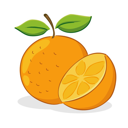 Vector illustration of an orange fruit