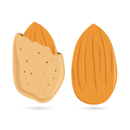 the kernel: Vector stock of almond nut with kernel Illustration