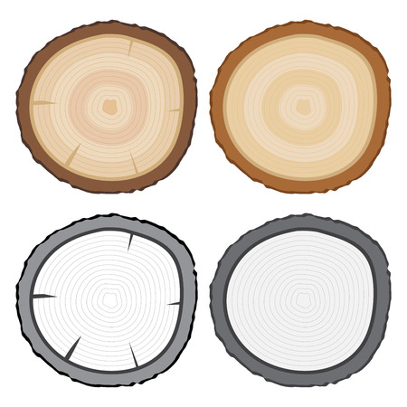 Vector stock of tree rings or tree stump in color and black and white Illustration