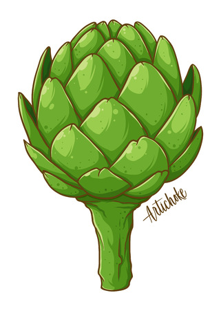 Artichoke fresh natural vegetable, hand drawn vector illustration isolated