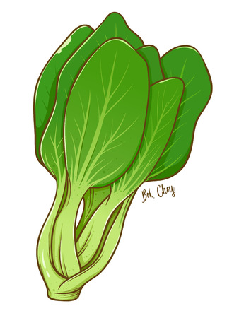 Bunch of green fresh book choy natural vegetable, hand drawn vector illustration isolated