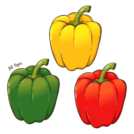 Paprika sweet red, yellow, green, bell pepper, hand drawn vector illustration isolated