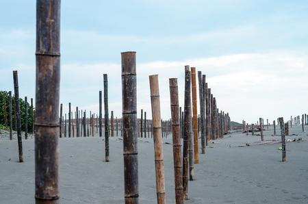 Bamboo seaside sand Stock Photo