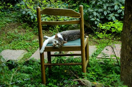 Stray cat Tabby animal Reklamní fotografie