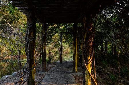 Vine Tunnel Avenue of trees Stock Photo