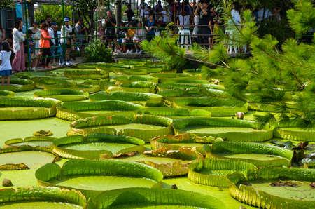 Taoyuan, Taiwan-JUL 14, 2019: Many people come to visit the Santa Cruz Waterlily pond in Guanyin, Taoyuan. Editorial