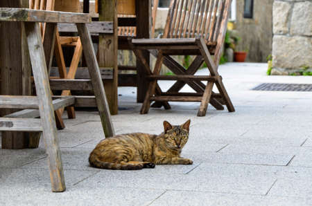 Tabby cat lying on the floor outdoors.