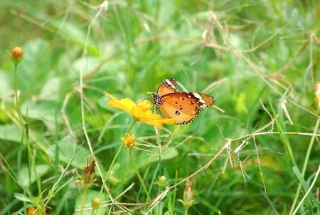 folwer: Butterfly