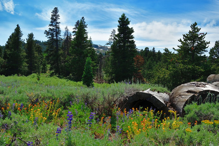 View in the Warner Mountains, Modoc County, California.