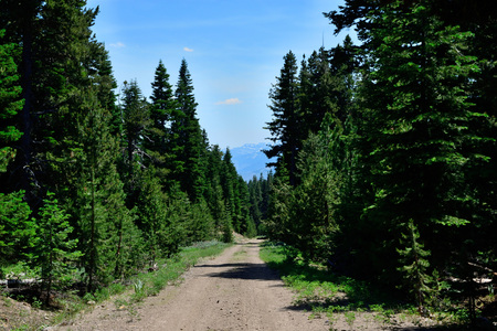 View down a dirt road in the Warner Mountains, Modoc County, California.
