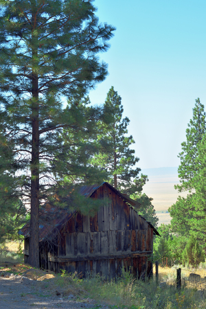 Old wooden barn nestled in the shade of forest pine trees.
