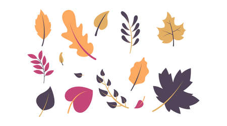 Flat autumn forest leaves collection vector