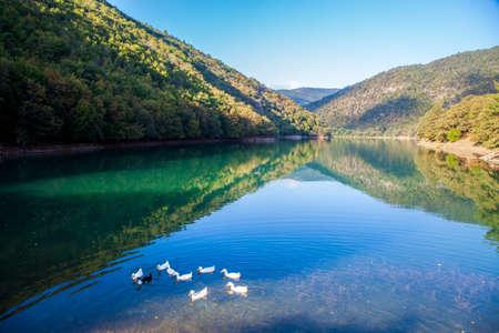 Ducks on the Borabay Lake in Amasya