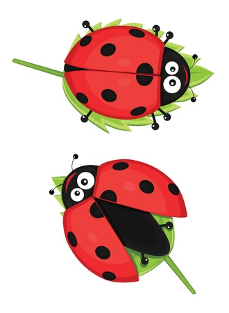 Cute ladybugs vector illustration Stock Vector - 13966552
