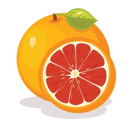 Grapefruit illustratie Stock Illustratie