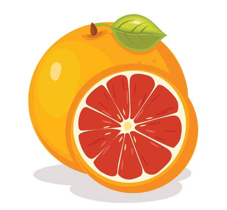 Grapefruit illustration Vector
