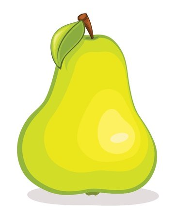 Pear illustration