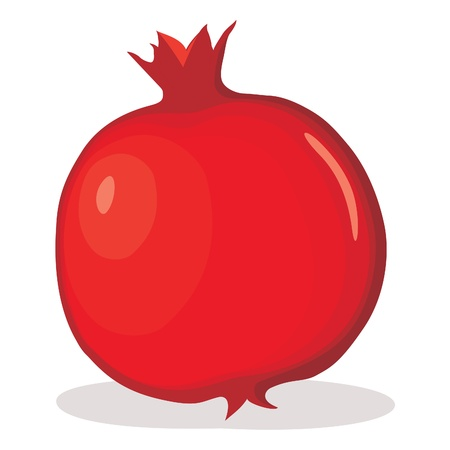 Pomegranate illustration Vector