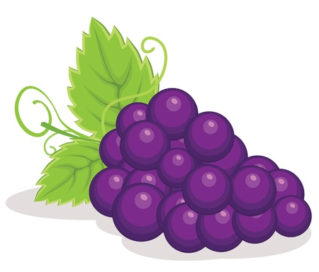 food and drink holiday: Redgrapes illustration
