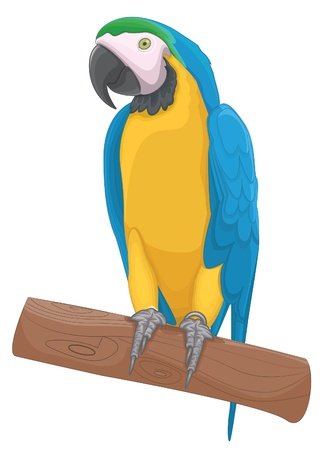 blue parrot: Parrot bird illustration Illustration