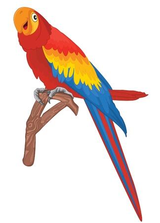 Parrot illustration Illustration
