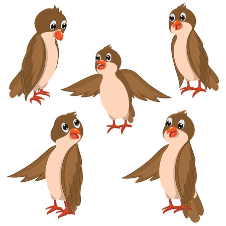 Brown Birds Illustrations Set