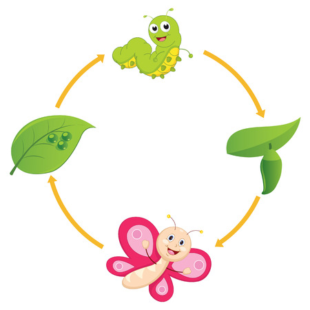 Vector Illustration of Cartoon Life Cycle of Butterfly 일러스트