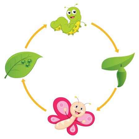 oruga: Ilustración del vector de la historieta del ciclo de vida de la mariposa