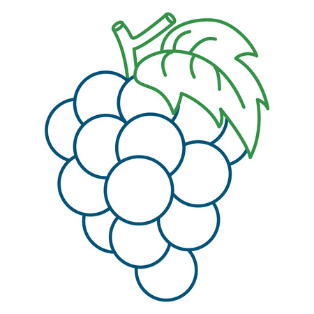 Coloring Page Illustration Of Grape Royalty Free Cliparts, Vectors ...