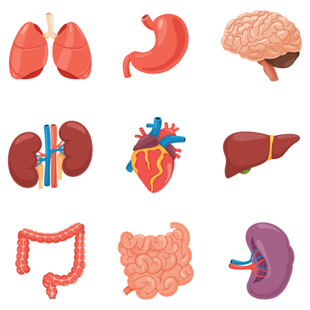 Organs Vector Illustration Set Vectores