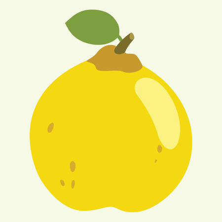 Quince Vector Illustration