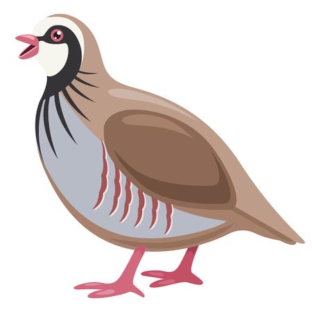 Vector Illustration Of Cartoon Partridge Vettoriali