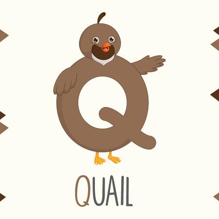 Alphabet Letter Q And Quail Vector illustration. Illustration