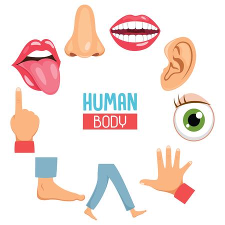 Vektorillustration der menschlichen Körperteile. Vektorgrafik